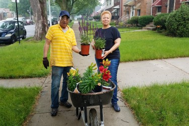 Neighbors work together to plant flowers on their block